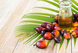 Boiler-for-Palm-Oil-Plant-small